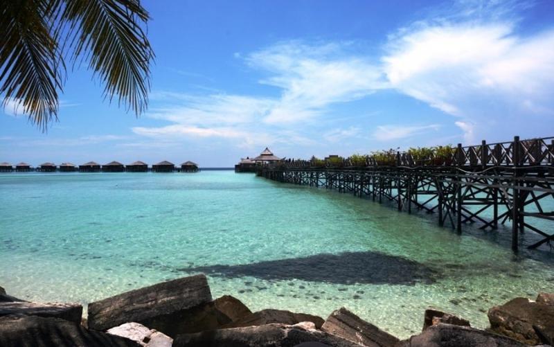 Borneo Malese Vagabondo