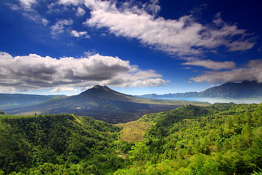 By TropicaLiving [CC BY-SA 3.0 (http://creativecommons.org/licenses/by-sa/3.0)], via Wikimedia Commons